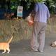 野良猫にエサを与える男性