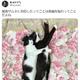 藤あや子さん「縦長サムネに対応したってことは…」 愛猫の長〜い2ショットをさっそく投稿