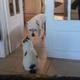 猫が怖くて通れない犬01