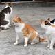馬島の港近くに集まった猫=津島史人撮影