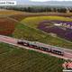 甘粛省のシルクロードの町、山丹県の祁連山の麓にある「如意花海」で10日、ランタナ(如意花)の花が咲き誇り、ゴビ砂漠に彩りを添えていた。観光客はSL型のミニ列車に乗り、花畑の中を走ることができる。