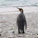 「ペンギンのうんち」から笑気ガスが生成されていることが判明、研究者がおかしくなってしまう事例も
