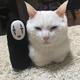 『千と千尋の神隠し』が名前の由来の白猫・ハク様とカオナシの2ショット(画像提供:@hakusama0906)