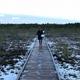 幻想的!エストニア【ラヘマー国立公園・ヴィル湿原】でお気軽トレッキング #link_estonia