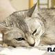 松風理咲、枕と掛布団で寝る愛猫は「人間のつもりみたい(笑)」