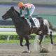 大井前開催の新馬で圧勝したオーチャードロード