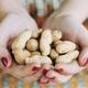 ピーナッツアレルギーに、突破口となる治療法が見つかる!?