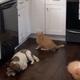 「猫がキッチンカウンターの上に乗らないようにする方法」01