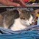 トルコで子猫5匹を殺して食べた日本人に罰金 国外退去処分になる見通し