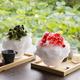 鎌倉・鶴岡八幡宮境内の絶景カフェ「風の杜」で、老舗茶屋が手掛けるひんやりスイーツを
