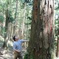 子や孫のために先祖が残してくれた自慢の大木を見上げる谷さん。