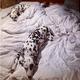 高岡早紀、ベッドに娘と愛犬たち「私はどこに…」