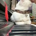 ご主人のピアノを聴く猫04