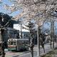 咲き誇る桜の木の下を走る京都市電(京都市左京区、福田さん提供)