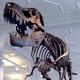 ティラノサウルスの化石、化石史上最高額で落札される01
