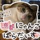 猫好きドライバーさんが企画「京都にゃんこぱらだいす」(MKタクシー提供)