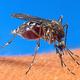 人を刺して血を吸う蚊=撮影日不明、米政府提供(AFP時事)
