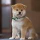 『和風総本家』のマスコット犬・豆助がミニ番組で帰ってくる!美しいニッポンを世界へ発信するMamesukeへ