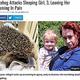 ハリネズミに襲われた3歳少女と母親(画像は『UNILAD 2020年6月30日付「Hedgehog Attacks Sleeping Girl, 3, Leaving Her Screaming In Pain」(Magnus News)』のスクリーンショット)