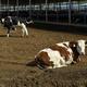 砂漠に生まれた「乳牛の楽園」、酪農振興に貢献 寧夏回族自治区