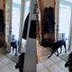ドアを開閉する犬01