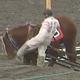 ばんえい競馬の「馬の顔蹴り問題」戒告処分の騎手が「騎乗自粛」