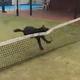テニスのネットに引っかかった犬の宙返り01