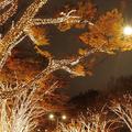 『Fairies 表参道イルミネーション2011』
