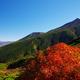 北海道のど真ん中! ナキウサギが棲む十勝岳連峰の裾野に広がる紅葉 北海道から毎日お届け中!