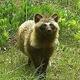 福島県の被災地で多種類の野生生物が豊富に繁殖していることが報告された/UGA/EurekAlert