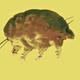 どの生物種にも属さない? 3000万年前の琥珀に眠る新種生物「コケ子豚」を発見
