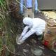 豚コレラの侵入を防ぐため、県職員らが野生イノシシに対する経口ワクチンを散布した=9月25日、浜松市天竜区(県提供)