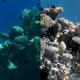 水中写真から水の質感を取り除くアルゴリズム「Sea-thru」が開発される