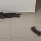 猫と床暖房01