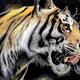写真じゃないのか……色鉛筆で丁寧に描かれた虎の毛並みが本物のように美しい