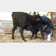 【動画】10分前まで親に蹴られていたとは… 子牛が ″乳飲みに至るまで″ の内容に感動の声が殺到!