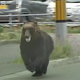 札幌市街地にクマが出没し4人が襲われけが 陸自駐屯地に逃げ込む