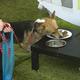 ペットフードを食べる犬(2014年5月18日撮影、資料写真)。(c)MICHAL CIZEK / AFP