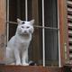 スロベニア 小さな町の「通せんぼ猫と道案内猫」