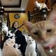 UAEで外国人による捨て猫が問題に、150匹保護する女性も