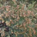 スギ、ヒノキ花粉の飛散距離はとても長く、広範囲に花粉が舞う