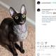 """""""悪魔""""と呼ばれる2歳の猫(画像は『Pixel & Sophie 2020年12月14日付Instagram「Me: """"Give Mama a smile, Pixel!""""」』のスクリーンショット)"""