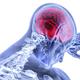 スマホ脳×子育て脳で母のメモリ崩壊!? ——しょうゆせんべいは何枚?の謎