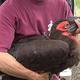 ついに捕獲に成功 千葉・柏市で目撃情報相次いだ「巨大鳥」