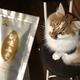 大好物の「ちゅ〜る」と誤解 インスタント味噌を見つめる猫