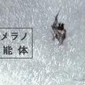 資生堂「HAKU」イメージキャラクター上野樹里さん