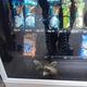 米高校の自販機に侵入したアライグマが「御用」