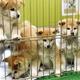 秋田犬保存会の公式Twitterでは、キュートな秋田犬の姿が毎日更新されている
