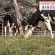 牛のげっぷ抑制→温室効果ガスが削減? 研究本格化
