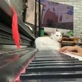 ご主人のピアノを聴く猫01